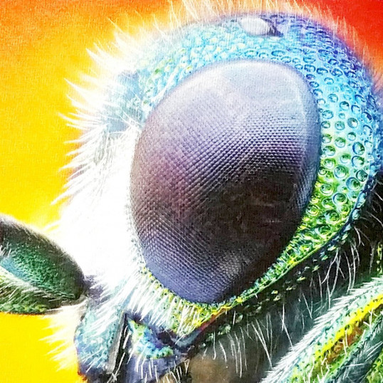 Full Color Macro of Insect